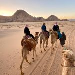 Riding camels during sunrise in the desert.